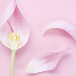 flore-vaginale
